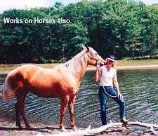 Pet Skin Care. Horse, Dog, Cat, Skin Care Treatment Horse Skin Care