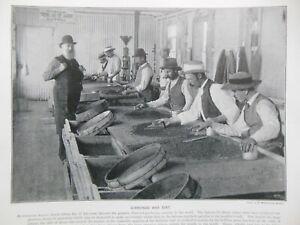 Victorian Photo Illustration (1897) Diamonds, South Africa - Zulu Leather Making