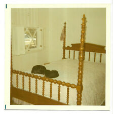 Square Vintage 70s PHOTO Pair Dogs Sleeping On Bed