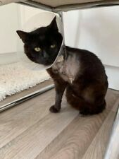Soldier needs your help Please donate towards his care at Sandbach Animal Rescue