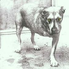 """ALICE IN CHAINS """"ALICE IN CHAINS"""" CD NEW"""
