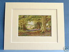 BEECHES AND BLUEBELLS BUCKS 1920 VINTAGE PRINT 10X8 INCL MOUNTS SUTTON PALMER