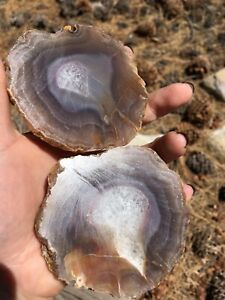 Agua Nueva Geode Agate Rough Semi polished Large Pair 13 Ounces