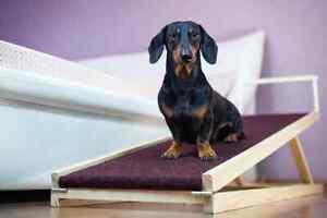 dog ramp, large