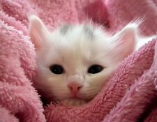 METAL REFRIGERATOR MAGNET White Kitten Surrounded By Pink Kittens Cat Cats