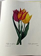 Pierre-Joseph Redoute- GESNER TULIP Multi-Colored Floral Print 13x10