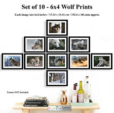Wolf Pack Wolves Wildlife Print Set of 10 6x4 Photo Picture Prints ONLY Wall Art
