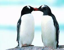 METAL MAGNET Penguins Smooching Penguin Love Family MAGNET