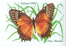 IMAGE CARD 60s  PAPILLON INSECTE BUTTERFLY INSECT Cethosia biblis Red Lacewing