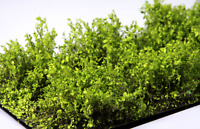 Martin Welberg SELB Light Brown High Bushes Thicket Model Ground Scenery Mini