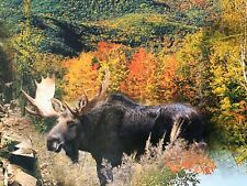 White Mountains, New Hampshire Jigsaw Puzzle 550 New England Foliage Complete