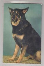 Quietschekarte Hund Typ Schäferhund AK Chiens Dogs Honden France 1601059