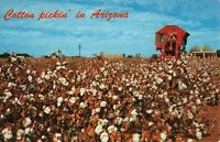 Postcard Cotton Pickin in Arizona