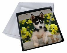 4x Siberian Husky by Daffodils Picture Table Coasters Set in Gift Box, AD-H67DAC