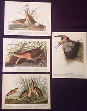 1942 Vintage AUDUBON LOT #2 of 4 0RANGE BIRDS INSTANT DECOR Art Lithographs