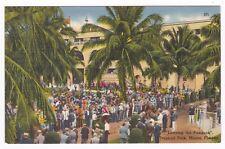 Postcard Tropical Park Racetrack King Thoroughbred Maimi Florida