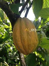 1 whole Cacao POD & fresh COCOA seeds inside    .germinete seeds 100% live