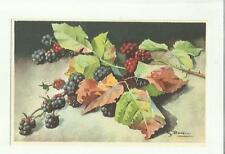 137912 stupenda cartolina artistica frutta di s. bonelli