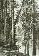 PINE TREE FOREST SACRAMENTO RIVER LOWER SODA SPRINGS ~ 1888 Landscape Art Print