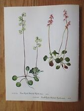 Set of 12 Vintage Walcott Wildflower Prints - Laurel, Lambkill etc. 9/1