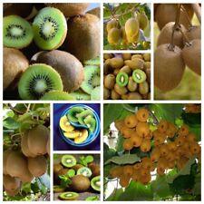 100 Kiwi Seeds Plants Fruits Actinidia Deliciosa Perennials Nature Tasty Garden
