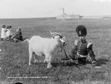 Photo. 1880s. Royal Welsh Fusilier & Goat