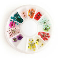 12 Kinds of 3D Decoration Real Dry Dried Flower for UV Gel Acrylic Nail Art Tips