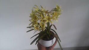 Vase Ceramic Flower Decor White Home New Modern Green Small Yellow Design