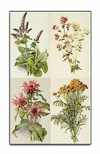 OLD HERB BOOKS on DVD - HERBAL MEDICINE - RARE PLANT REMEDIES MEDICAL BOTANY 274