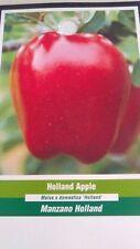 4'-5' live Holland Apple Fruit Tree Plant Live Trees Fresh Apples Home Garden