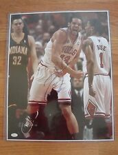 Joakim Noah Chicago Bulls Signed Auto 16 x 20 picture JSA  photo FLORIDA