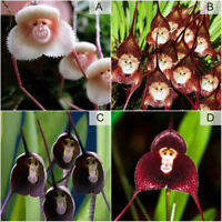 30pcs Monkey Face Orchid Flower Seeds Plant Seed Bonsai Rare Home Garden Decor