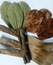 Guava-Banana-Catappa leaves & Bark for Aquarium Water PH Total Solution 4 in 1