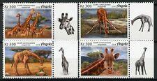 Angola 2018 MNH Giraffes Giraffe 4v Set Fauna Mammals Wild Animals Stamps