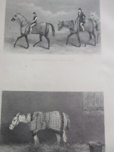 ANTIQUE PRINT C1800'S ENGRAVING RACE HORSE AT EXERCISE & DAY AFTER CLIPPING ART