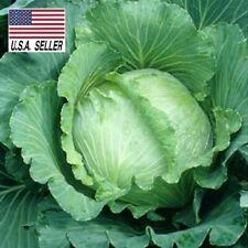 All season Cabbage - 100 Seeds - Heirloom Non-gmo, Garden Vegetable Fast ship!