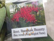 Orchid Vanda Rnst. Bangkok Beauty Exotic Tropical Plant