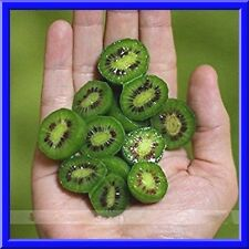 Kiwiberry Mini Kiwi Seeds  NO FUZZ -SUPER SWEET MINI'S! 15 Seeds