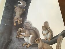 Ray Harm ( Gray Squirrel ) autographed lithograph print# 997 Frame House