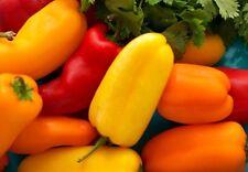 60+ Mini Snack Sweet Pepper Seeds~NON-GMO
