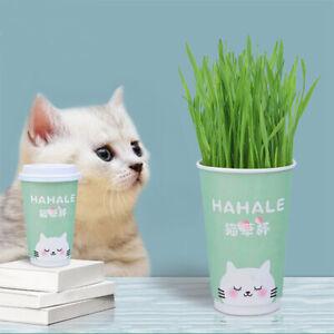 Organic Cat Grass Soilless Culture Cup Set Wheat Seeds Cat Natural Snacks