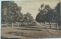 .PERTH, THE DRIVE KING'S PARK WEST AUSTRALIA EARLY 1900'S POSTCARD