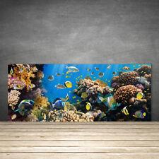 Crédence de cuisine en verre Panneau 125x50 Nature Récif De Corail