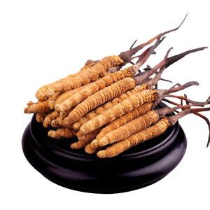 2g Cordyceps sinensis whole dried mushrooms (Yartsa Gunbu, caterpillar fungus)