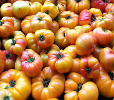 Tomato MR. STRIPEY 25 Heirloom, Non-gmo Seeds - FREE SHIPPING