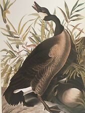 POSTCARD UNUSED JOHN J. AUDUBON-CANADA GOOSE-THE BIRDS OF AMERICA, PLATE 201