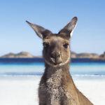 Aussie_OP_Shop