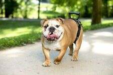 New listing PetSafe CareLift Rear Support Harness M Rear Only 35-70 Lbs Senior Disabled Dogs