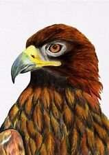 Golden Eagle Bird Watercolour Painting A4 Signed Limited Edition Print Artwork
