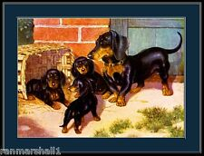 English Print Dachshund Dog Puppy Dogs Puppies Vintage Poster Picture Art